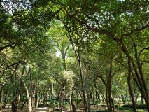 landscape with green foliage of the trees of temperate forest royalty free stock photography