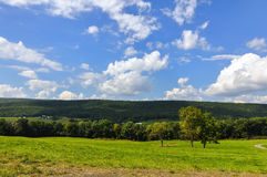landscape of the green  forest Royalty Free Stock Photography