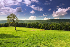 landscape of the green  forest Royalty Free Stock Images