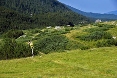 Landscape of Green forest in Pirin Mountain Royalty Free Stock Image