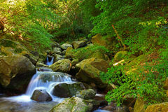 Landscape of green forest and river Royalty Free Stock Image