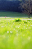 Landscape with green grass. Vertical blurred landscape with green field and trees Royalty Free Stock Photography