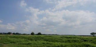 Landscape. Green grass stock photos