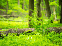 Landscape. Green Grass And Trees Royalty Free Stock Photography