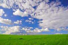 Landscape with green grass and cloudy sky Royalty Free Stock Photography