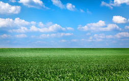 Landscape with green grass Stock Photo