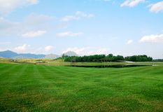 Landscape of Green grass field royalty free stock images
