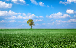 Landscape with green grass field Royalty Free Stock Photography