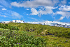 Landscape with green grass and snowy mountains Stock Images