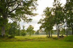 Landscape. A green and harmonic landscape Stock Image
