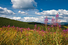 Landscape with green hills and flowers Stock Image
