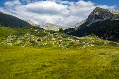 Landscape of Green hills in Pirin Mountain Royalty Free Stock Photo