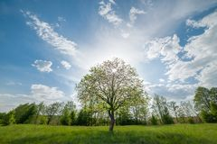 Landscape with green lonely tree on meadow Royalty Free Stock Photo
