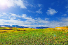 Landscape with green meadow and blue sky Stock Photos
