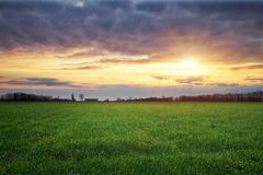 Landscape with green meadow and sun. Sunset. Royalty Free Stock Image