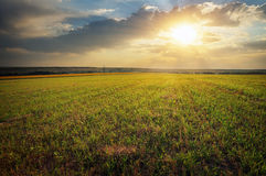 Landscape with green meadow and sun. Sunset. Composition of nature Royalty Free Stock Photos