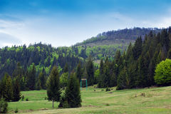 Landscape of green meadows with fir-trees and mountains Royalty Free Stock Photo