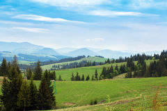 Landscape of green meadows with fir-trees and mountains Stock Images
