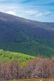 Landscape of green mountains Stock Photography