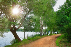 Landscape of green nature on lake in park with bright sun. path near  lake in green park Royalty Free Stock Photography