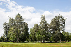 Landscape green park royalty free stock photography