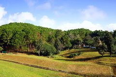 Landscape of green pine tree forest on hillside with blue sky Stock Photo