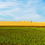 Landscape of green plants and sand dunes Royalty Free Stock Photo