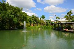 Landscape of a green pond with red carps and a fountain on the b stock photo