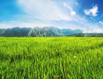 Landscape green rice grassland field with mountain and blue sky Stock Photo