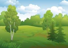 Landscape, green summer forest Stock Images