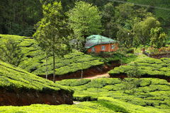 Landscape of green tea plantations. Munnar, Kerala, India Stock Photography