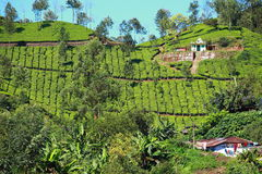 Landscape of green tea plantations. Munnar, Kerala, India Stock Photo