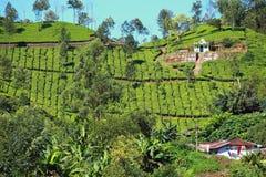 Landscape of green tea plantations. Munnar, Kerala, India Stock Photo