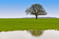 Landscape with green tree with water reflection. Beautiful landscape with green tree with water reflection Royalty Free Stock Photo