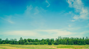 Landscape with green trees and blue sky in the summertime Royalty Free Stock Photo