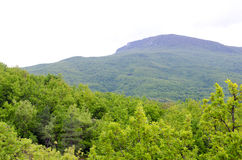 Landscape of green trees over mountains. In village Bogatyr, Bakhchisaray district, Crimea Stock Images