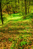 Landscape with green trees in spring forest Royalty Free Stock Image
