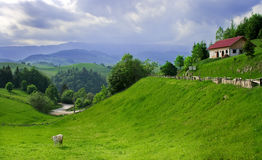 Landscape: green valley, cow and cloudy sky Stock Photography