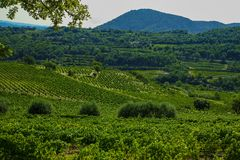 Landscape with green vineyards in Luberon, Privence, France. Landscape with green vineyards and mountains in Luberon, Privence, France royalty free stock images