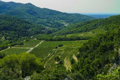 Landscape with green vineyards in Luberon, Privence, France. Landscape with green vineyards and mountains in Luberon, Privence, France royalty free stock photos