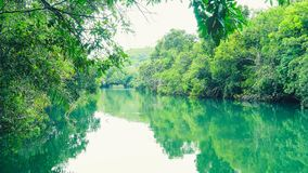 Landscape of green water and forest around Formoso river in Bonito MS, Brazil. stock photo