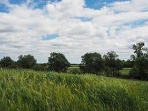 Landscape of green weat field, cloudy blue sky . Stock Photos
