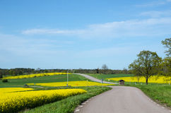 Landscape in green and yellow. Landscape with a mosaic in green and yellow at the swedish island Oland Royalty Free Stock Photo