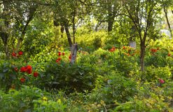 Landscape of greenery and tulips royalty free stock photos