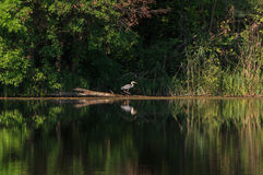 Landscape with grey heron Stock Photos