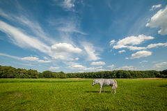 Landscape with Grizzle Horse Stock Photo