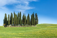 Landscape with group of cypresses, Tuscany Royalty Free Stock Images