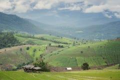 Landscape grow rice Stock Photos