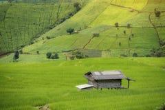 Landscape grow rice Royalty Free Stock Photos