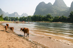 The landscape in guilin, china Stock Image